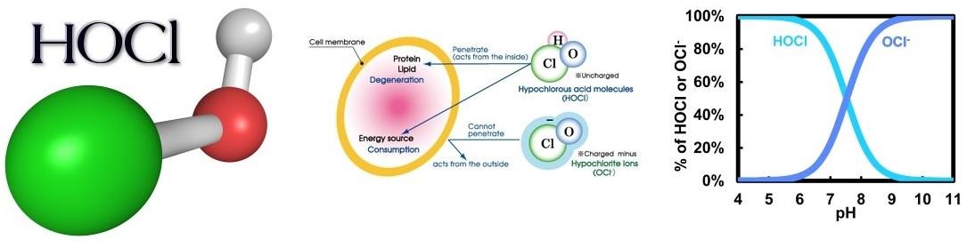 HOCl ist ein natürlicher Wirkstoff