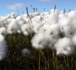 Envirolyte Anwendung ECA Wasser Anolyt Katolyt Industrie Baumwolle
