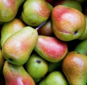 Envirolyte Anwendung ECA Wasser Anolyt Katolyt Spritzmittel Gartenbau Landwirtschaft Birnen 2