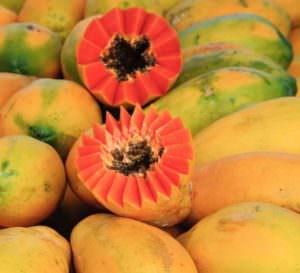 Envirolyte Anwendung ECA Wasser Anolyt Katolyt Spritzmittel Gartenbau Landwirtschaft Papaya 2