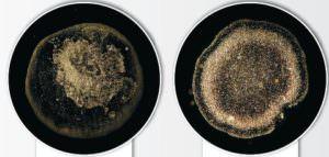 magnetic Kalkumwandler Mikrooptische Untersuchung