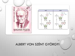 27-Albert von Szent Györgyi