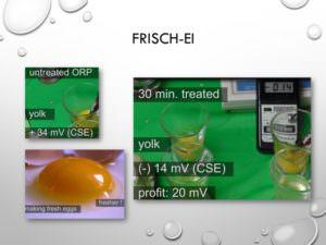 46-Frisch Ei